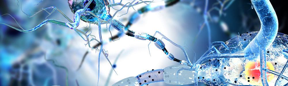 Клеточное строение организмов
